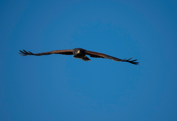 Raptor Free Flight _26
